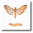 Information about moths